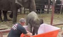 Смішне слоненя під час купання